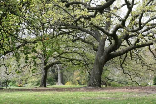 Melbourne botanic garden trees