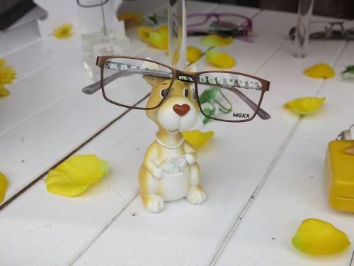 Kangaroo with glasses